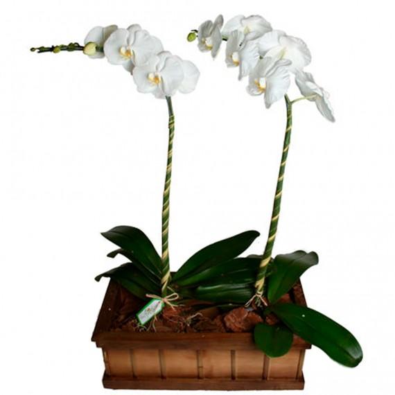 Arranjo Nobre de Orquídeas
