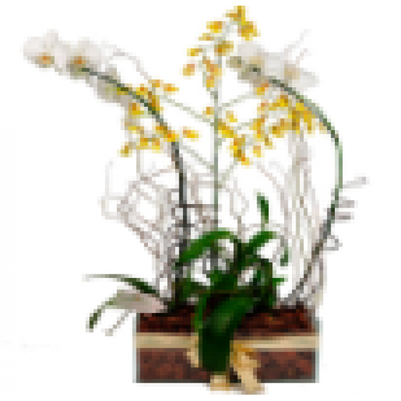 Combinado de Orquídeas Luxo